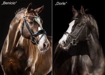 Foal v. Benicio a.d. Dorle v. De Niro