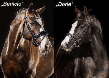 Fohlen v. Benicio a.d. Dorle v. De Niro